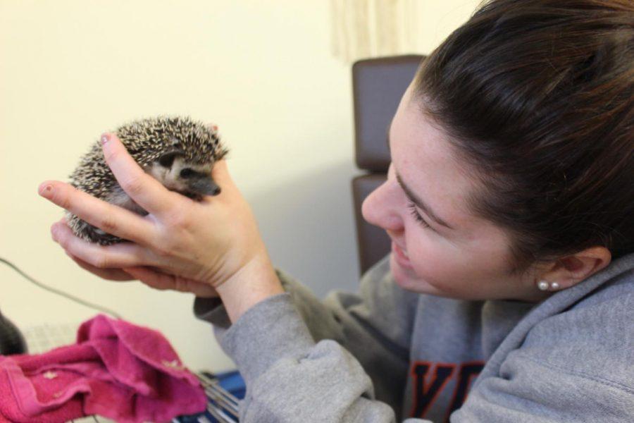 Having A Hedgehog 'Reset Button'