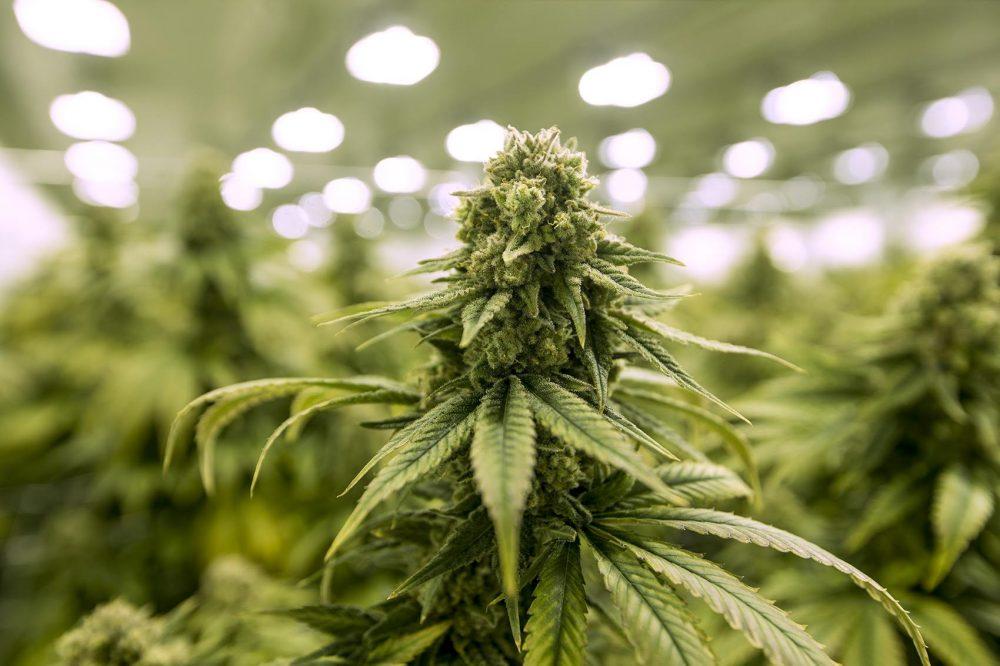 Multiple bills on legalizing recreational marijuana are floating in the Connecticut legislature right now.