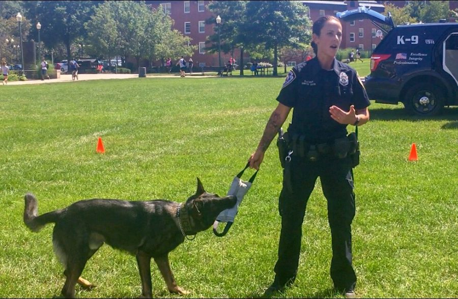 Middletown Officer Aura Smith demonstrated Diezel's apprehension skills with a bite sleeve.