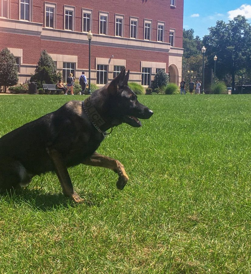 Diezel is an expert K-9 in tracking and apprehension.