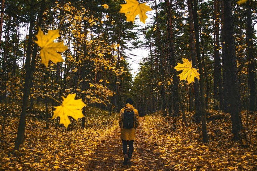 Fall+Into+A+Budget